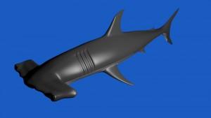 Hammerhead SHark 3D Model Screenshot / Render